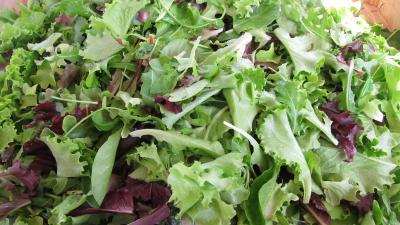Photo : Salade mesclun