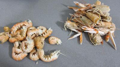 Crustacés et poisson en marmite - 2.1
