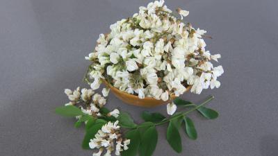 Photo : Fleurs d'acacia