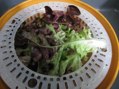 Magrets en brochettes à la plancha en salade - 1.2