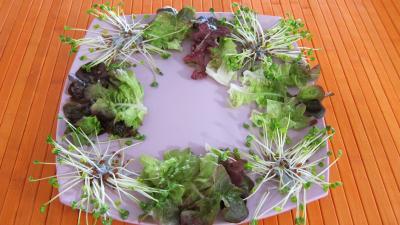 Piments doux en salade - 7.1