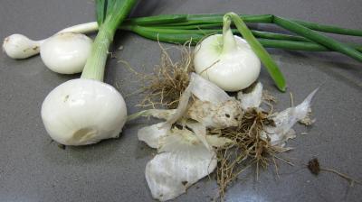 Gazpacho andalou aux poivrons verts - 3.2