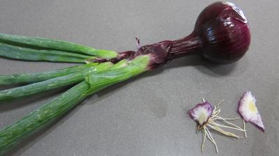 Conserve de ragoût de blettes et d'oseille au basilic - 1.2