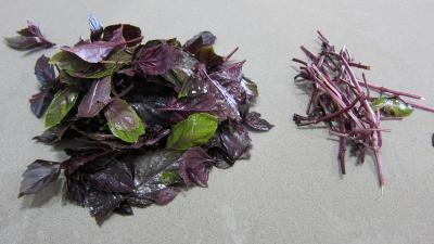 Conserve de ragoût de blettes et d'oseille au basilic - 3.3