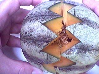 Melons en blanquette - 6.2