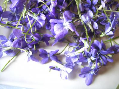 Fleurs cristallisées - 1.1