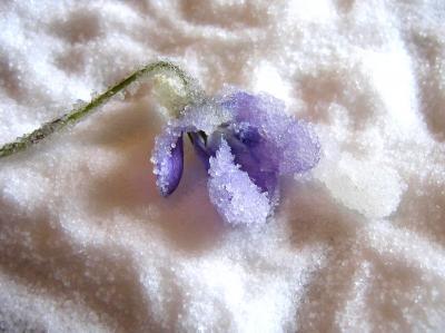 Fleurs cristallisées - 4.1