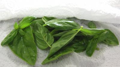 Pesto - 1.1