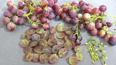 Clafoutis aux raisins et au brousse - 1.1