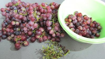 Chutney aux raisins frais - 1.1