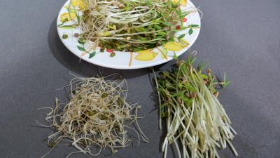 Poêlée de germes de soja - 1.1