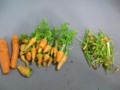 Boeuf aux carottes - 2.3