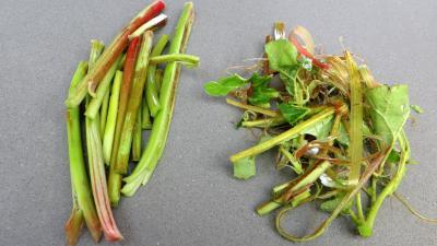 Confiture de pommes à la rhubarbe façon compote - 1.1