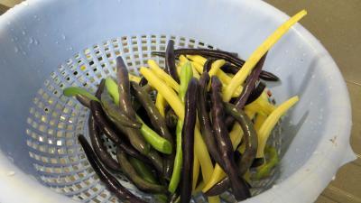 Stérilisation des haricots verts - 3.2