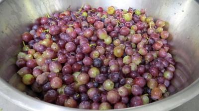 Gelée de raisins au reste de punch - 1.3