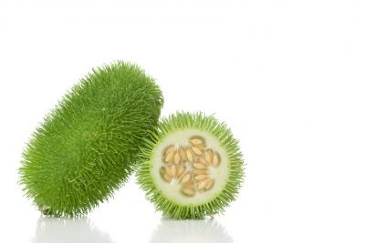 Photo : Concombre des antilles