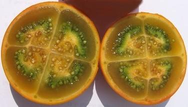 Photo : Narangille - Narangille