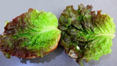 Sandwichs champignons et beurre d'ail - 2.2