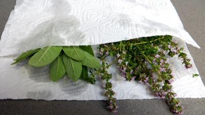 Velouté de fèves au chèvre frais - 1.1