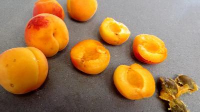 Abricots à la Condé - 1.3