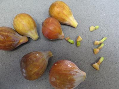 Bouchées moelleuses aux figues - 4.1