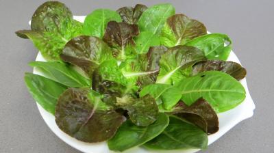 Haricots mungo en salade - 3.3