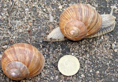 Photo : Escargots