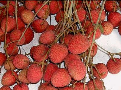 Photo : Litchi