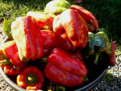 Photo : Plat de poivrons rouges