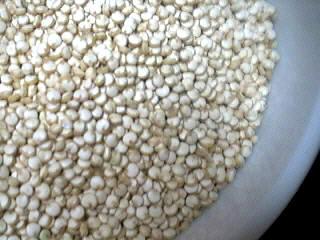 Photo : Graines de quinoa