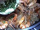 Salade tiède de gambas à la cancoillotte - 11.1
