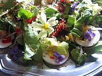 Recette Assiette de violettes et primevères en salade