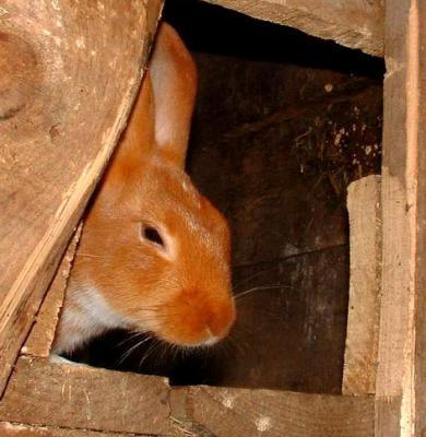 Photo : Le lapin dans sa cage