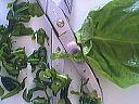 Salade de saumon fumé - 3.2
