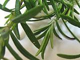 Velouté crémeux aux herbes - 4.1