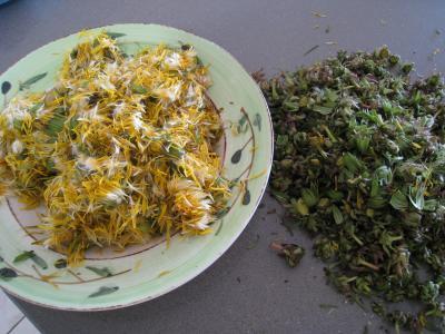 Gelée ou cramaillote de fleurs de pissenlits - 2.1