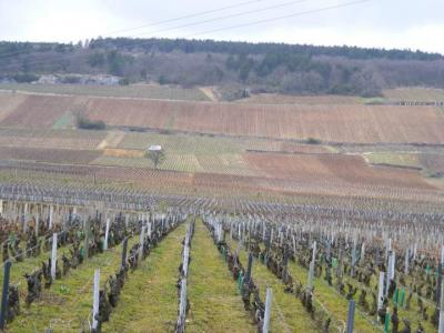 Photo : Vignes de Bourgogne