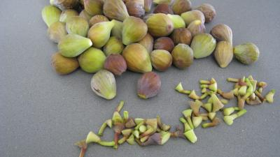 Poêlée de figues au caramel - 1.1