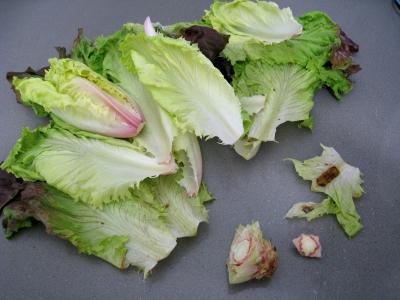 Salade Argenteuil - 4.4