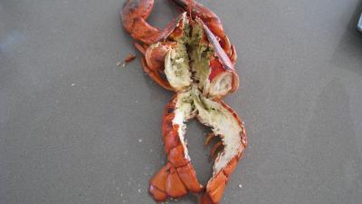 Verrines de homard en salade - 4.1