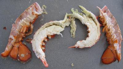 Verrines de homard en salade - 5.2