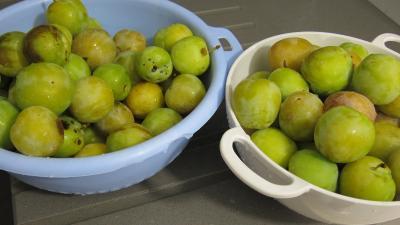 Confiture de prunes blanches - 1.2